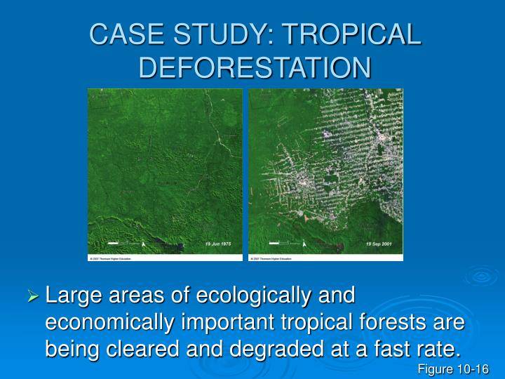 CASE STUDY: TROPICAL DEFORESTATION