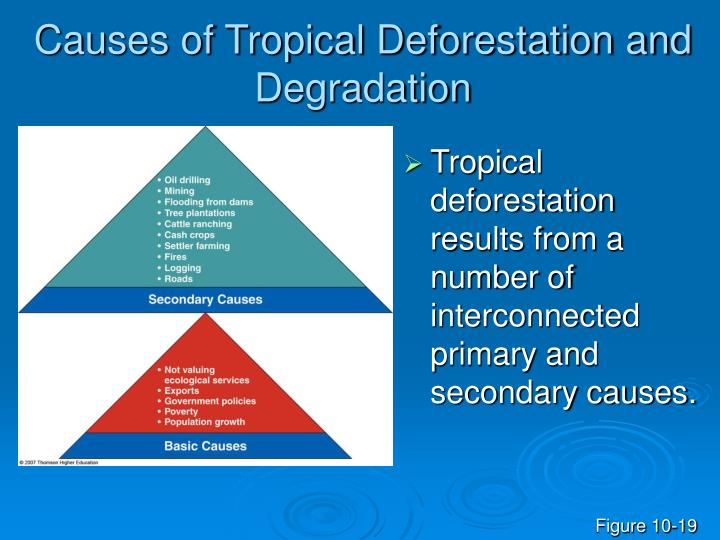 Causes of Tropical Deforestation and Degradation