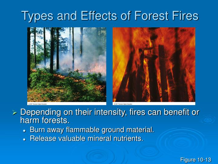 Types and Effects of Forest Fires