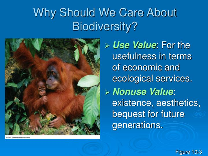 Why Should We Care About Biodiversity?