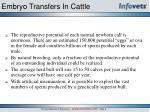 embryo transfers in cattle