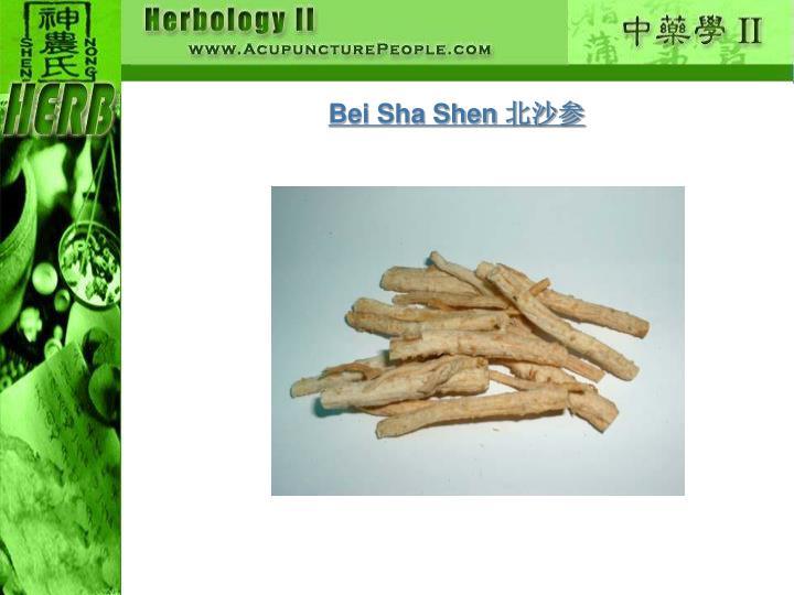 Bei Sha Shen