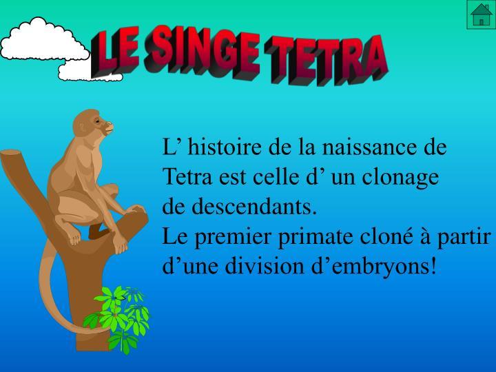 LE SINGE TETRA