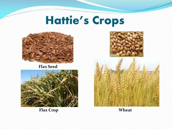 Hattie's Crops