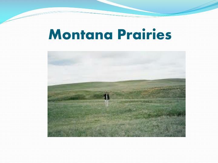 Montana Prairies