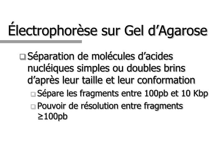 Électrophorèse sur Gel d'Agarose