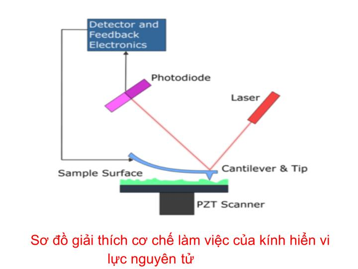 Sơ đồ giải thích cơ chế làm việc của kính hiển vi