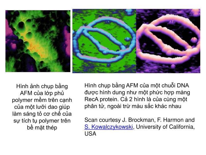 Hình ảnh chụp bằng AFM của lớp phủ polymer mềm trên cạnh của một lưỡi dao giúp làm sáng tỏ cơ chế của sự tích tụ polymer trên bề mặt thép