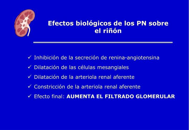 Efectos biológicos de los PN sobre el riñón