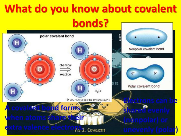 What do you know about covalent bonds?