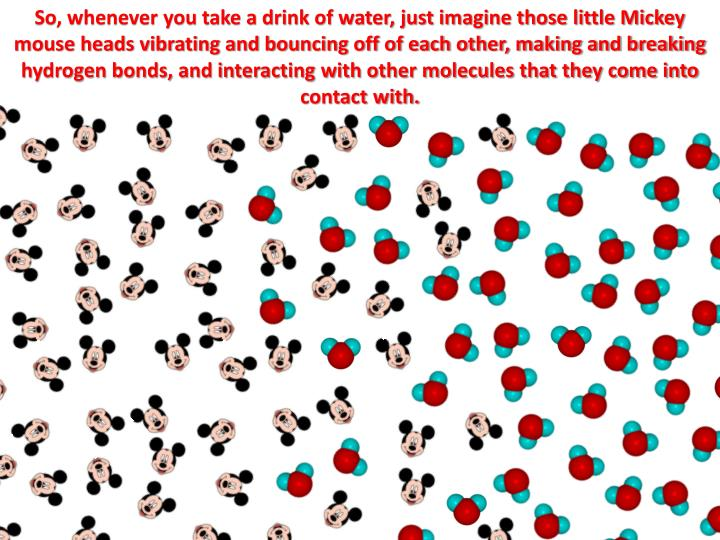 So, whenever you take a drink of water, just imagine those little Mickey mouse heads vibrating and bouncing off of each other, making and breaking hydrogen bonds, and interacting with other molecules that they come into contact with.