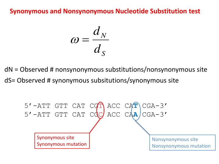Synonymous and Nonsynonymous Nucleotide Substitution test