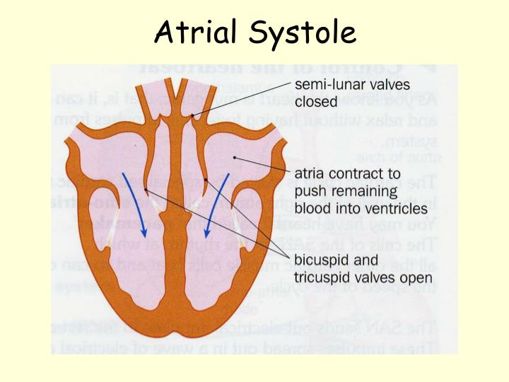 Atrial Systole