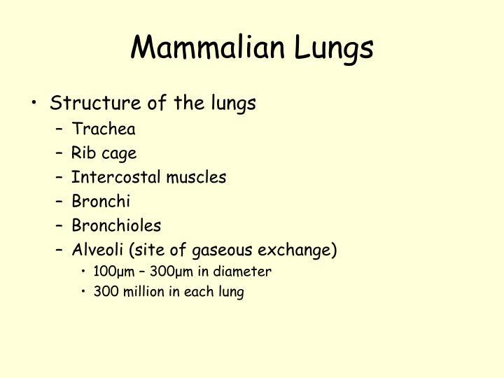 Mammalian Lungs