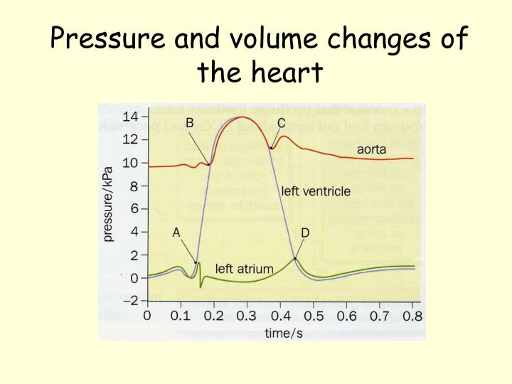 Pressure and volume changes of the heart