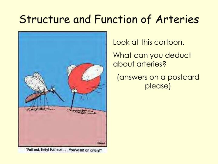 Structure and Function of Arteries