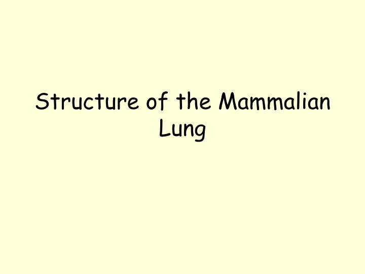 Structure of the Mammalian Lung