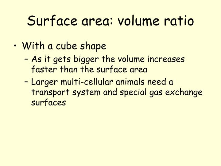 Surface area: volume ratio
