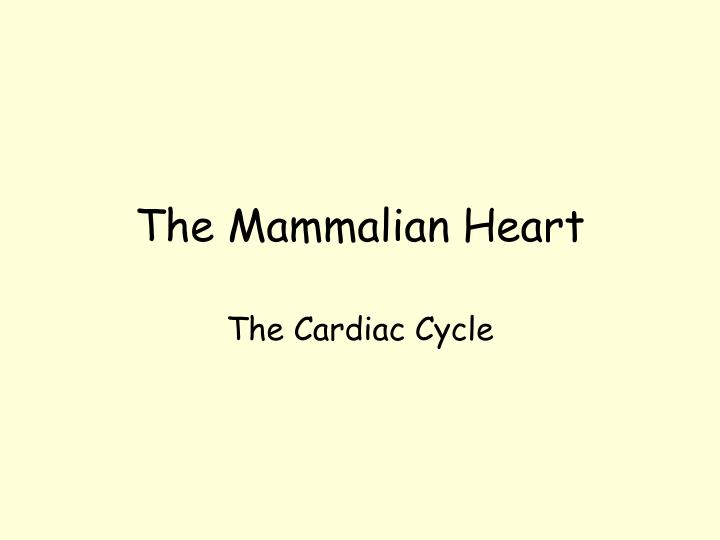 The Mammalian Heart