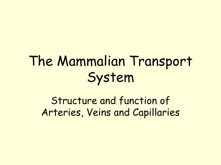 The Mammalian Transport System
