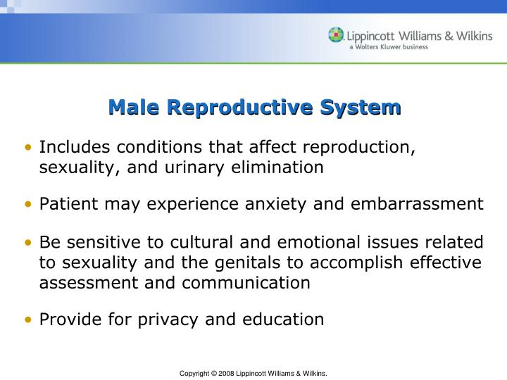 Male reproductive system