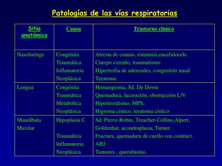 Patologías de las vías respiratorias