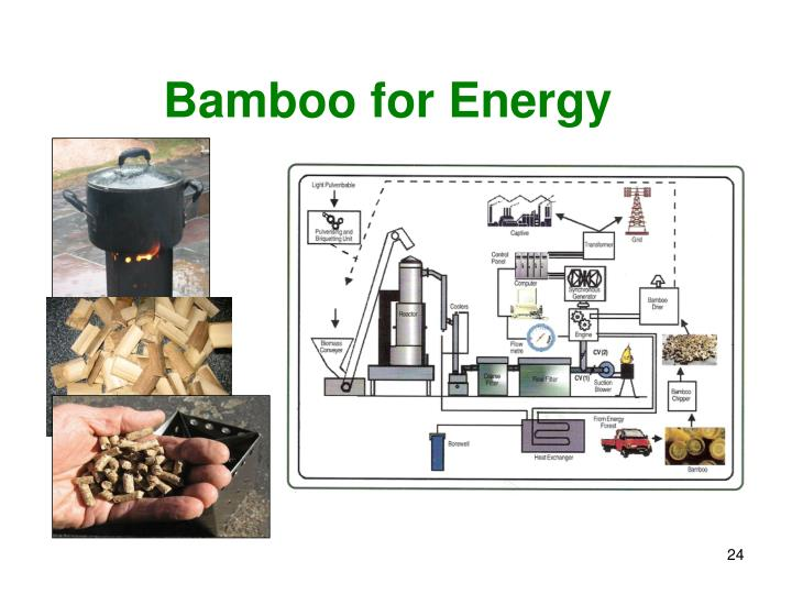 Bamboo for Energy