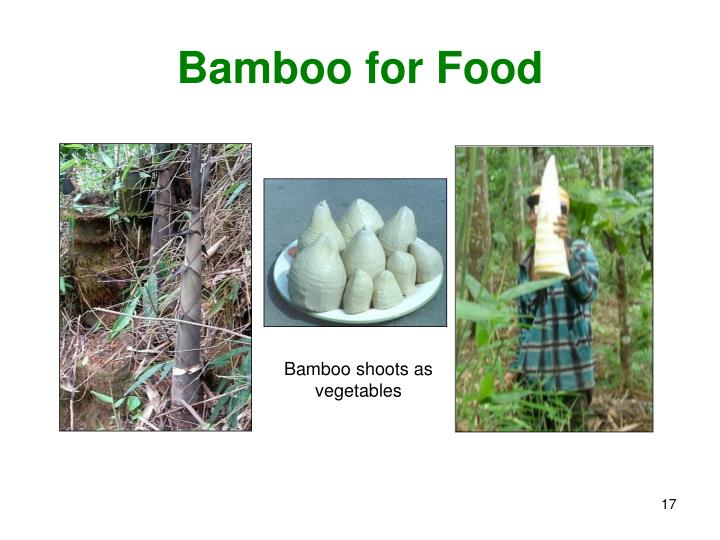 Bamboo for Food