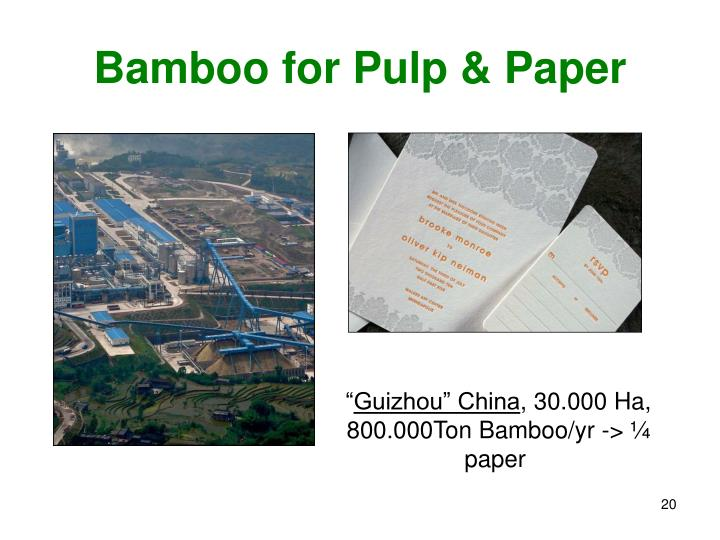 Bamboo for Pulp & Paper