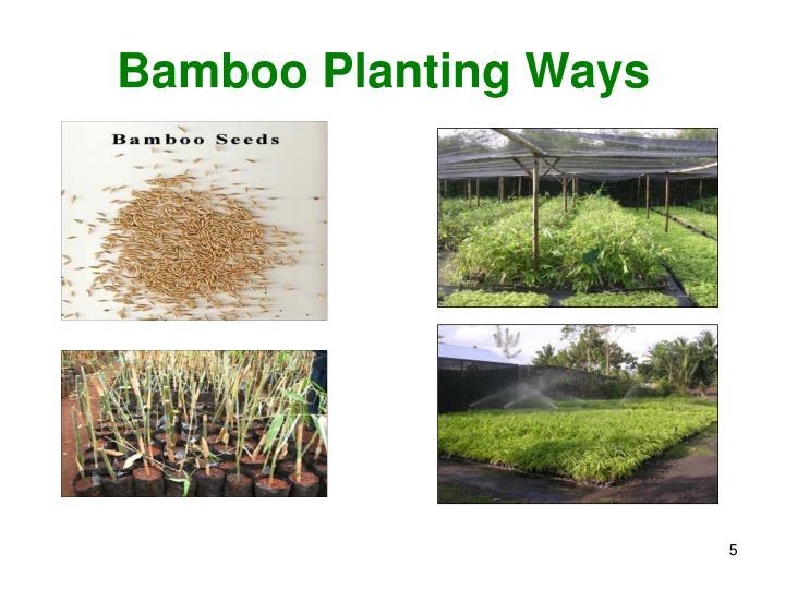 Bamboo Planting Ways