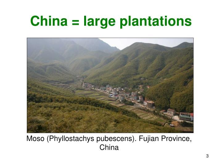 China = large plantations
