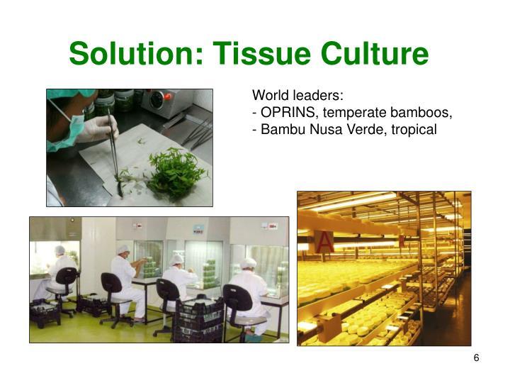 Solution: Tissue Culture