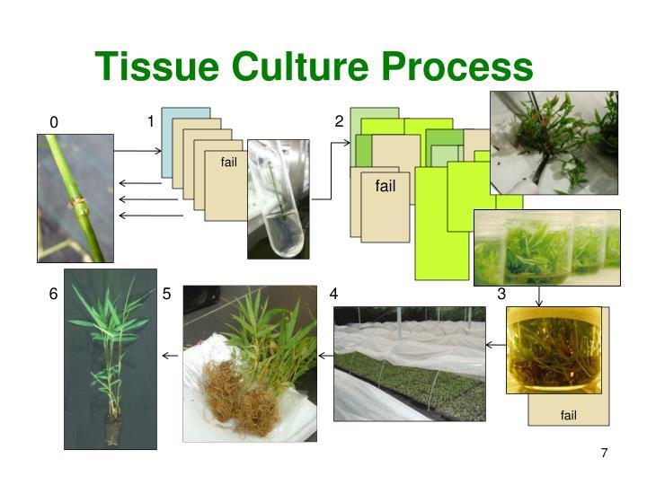 Tissue Culture Process