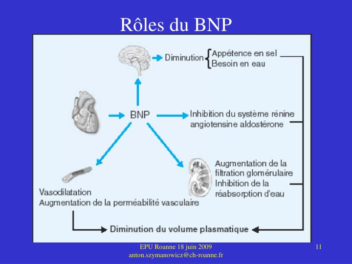 Rôles du BNP