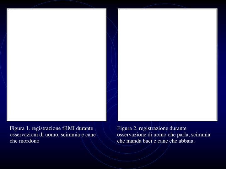 Figura 1. registrazione fRMI durante osservazioni di uomo, scimmia e cane che mordono