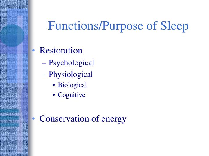 Functions/Purpose of Sleep