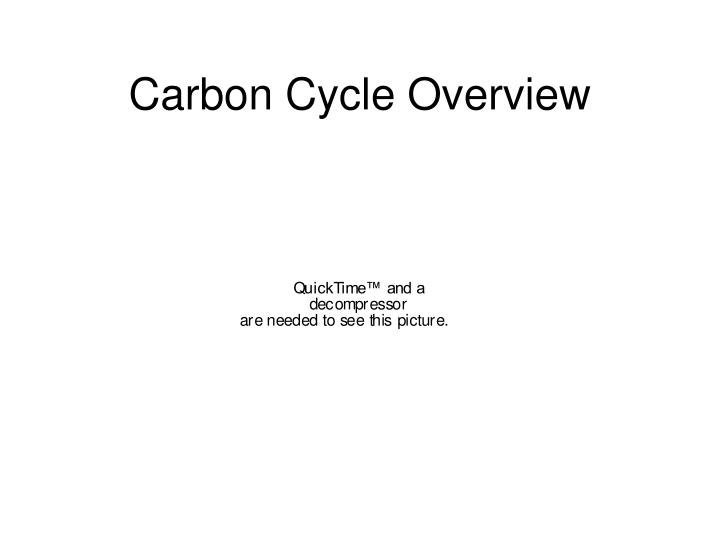 Carbon Cycle Overview