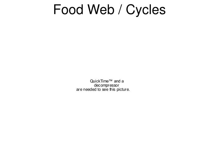 Food Web / Cycles
