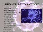 espiroquetas borrelia burgdorferi