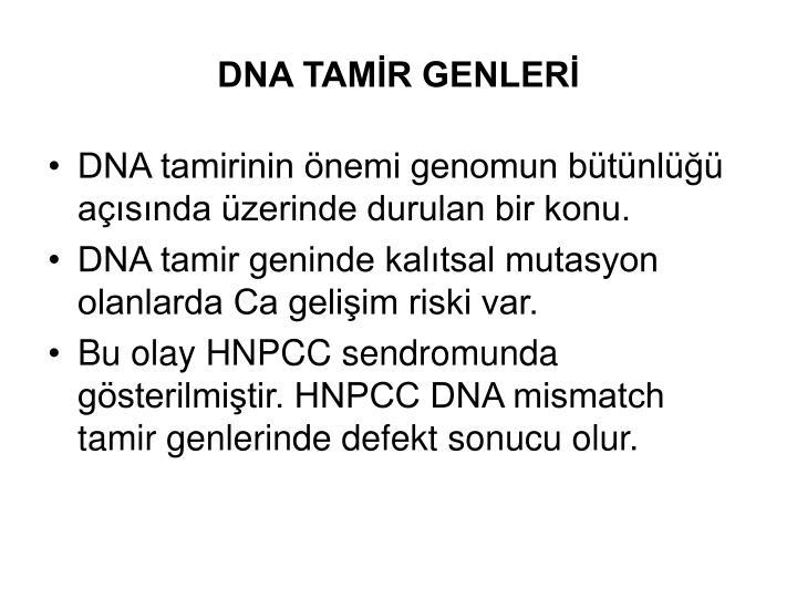 DNA TAMİR GENLERİ