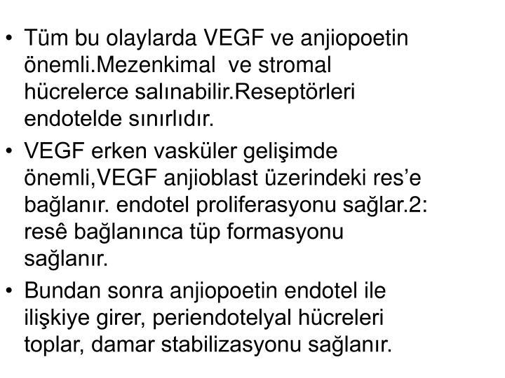 Tüm bu olaylarda VEGF ve anjiopoetin önemli.Mezenkimal  ve stromal hücrelerce salınabilir.Reseptörleri endotelde sınırlıdır.