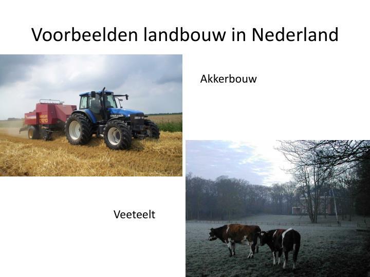 Voorbeelden landbouw in Nederland