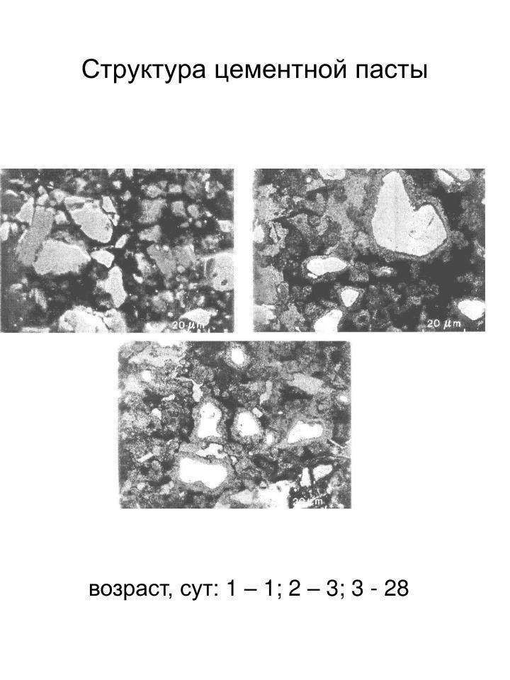 Структура цементной пасты