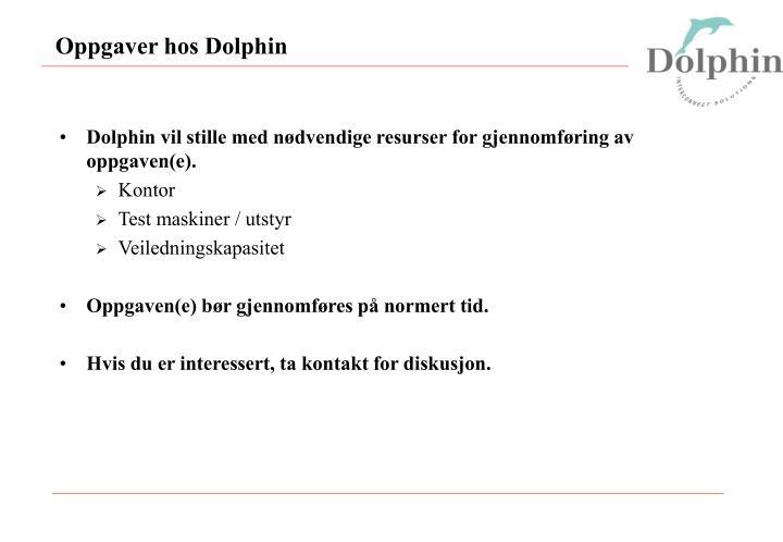 Oppgaver hos Dolphin