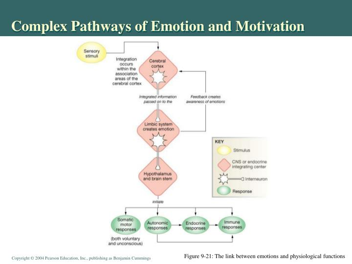 Complex Pathways of Emotion and Motivation