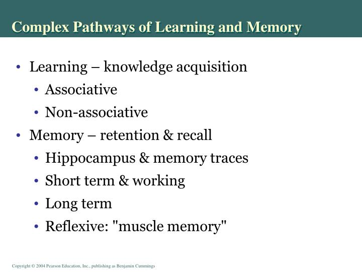 Complex Pathways of Learning and Memory