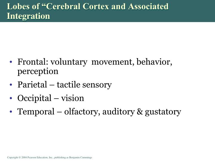 "Lobes of ""Cerebral Cortex and Associated Integration"