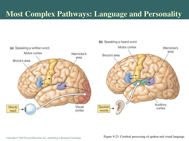 Most Complex Pathways: Language and Personality