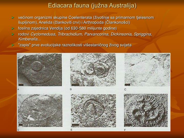 Ediacara fauna (južna Australija)