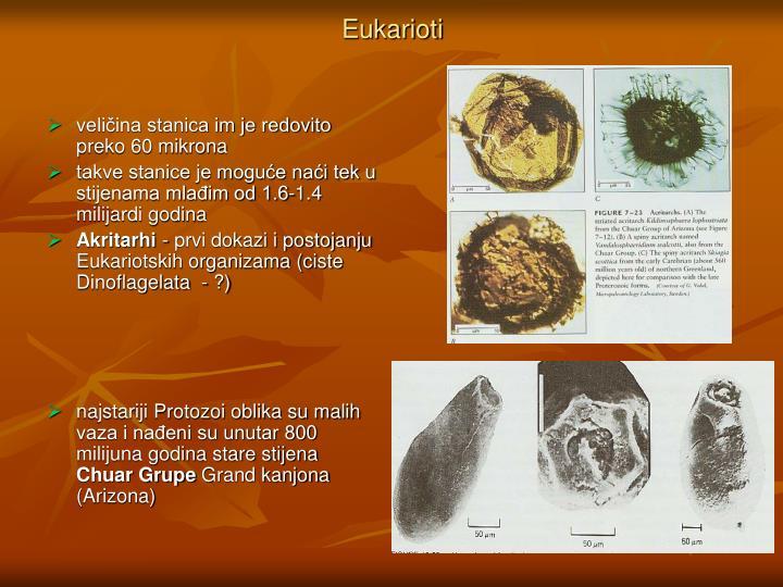 Eukarioti